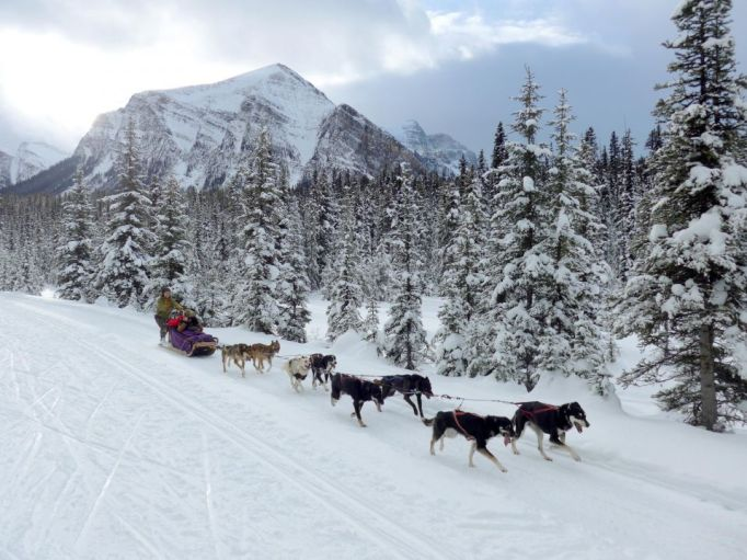 dogsled-great-divide-trail-moment-banff-alberta